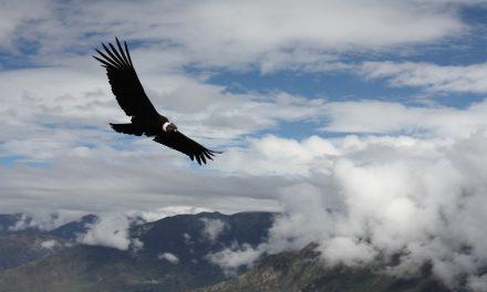 Mach es wie der Condor – schauen, planen, fliegen