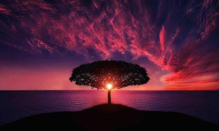 50 H Yogalehrer Weiterbildung – Traumarelease Yoga & Coaching